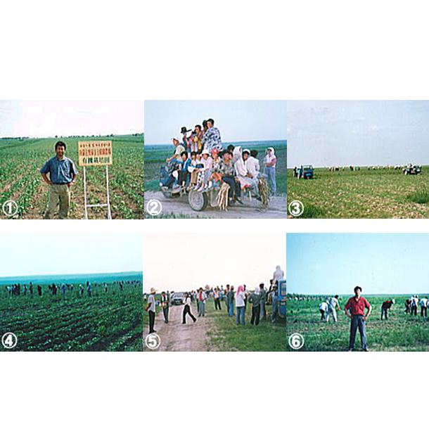 モンゴルの上原園オーガニック緑豆実験農場